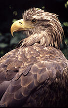 / ©: Chris Martin Bahr / WWF