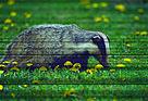 / ©: Aykut İnce / WWF-Türkiye