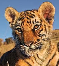 / ©: WWF Canon