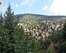Konya ormanları iklim değişikliğine hazırlanıyor