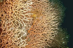 Türkiye'nin Tek İç Denizi Marmara'nın Canı Mercanlar