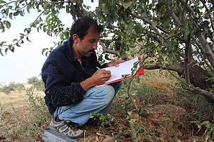 Arazi çalışması. Sütlüce, Çanakkale