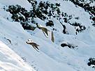 / ©: Turgut Tarhan / WWF-Türkiye