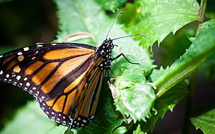 / ©: Paul Bettings / WWF-Canada