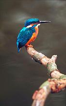 / ©: Fred F. Hazelhoff / WWF